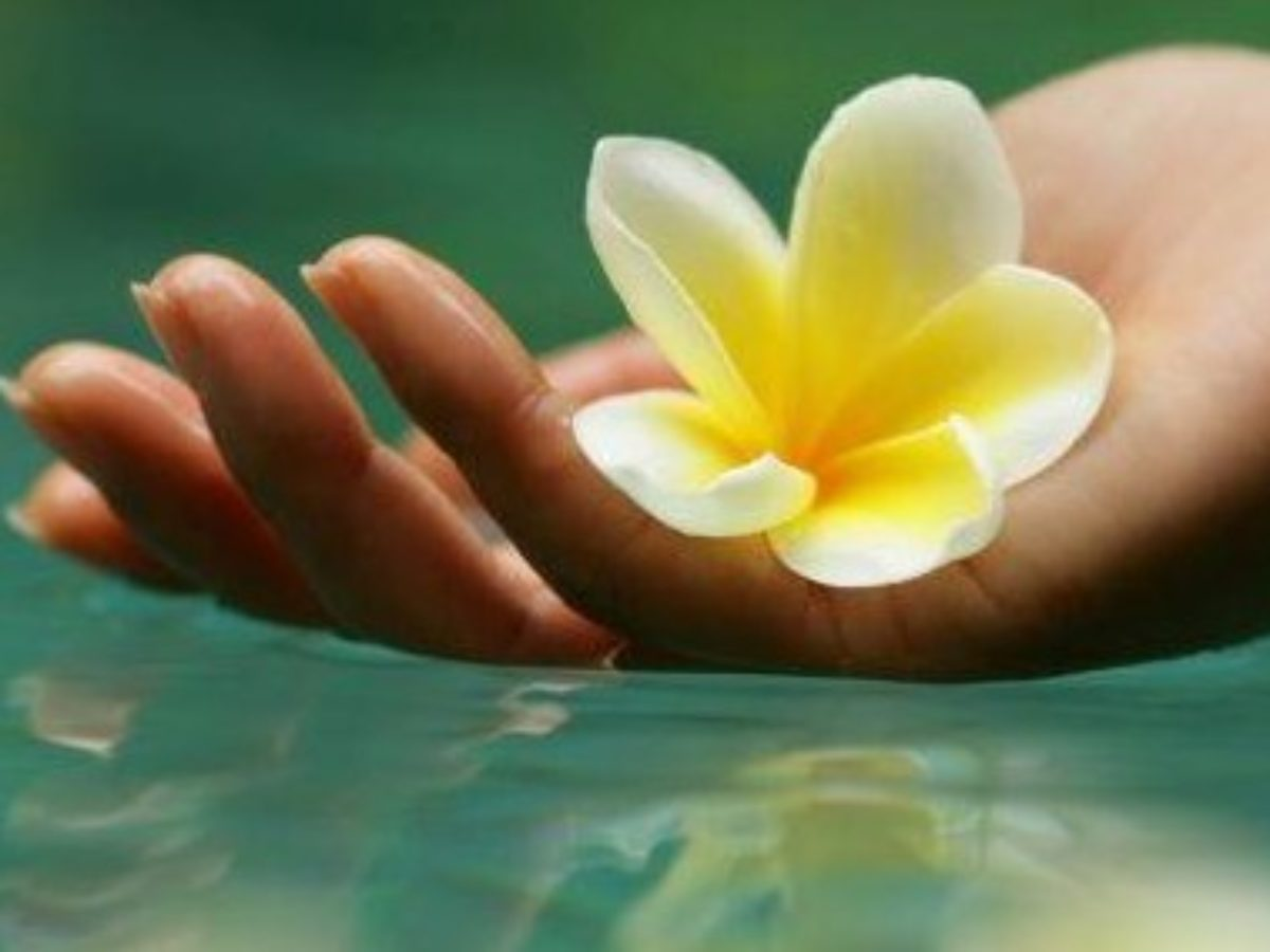 3 Keajaiban Bunga Kamboja Untuk Kesehatan Dan Kecantikan Kulit