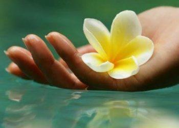 Keajaiban Bunga Kamboja